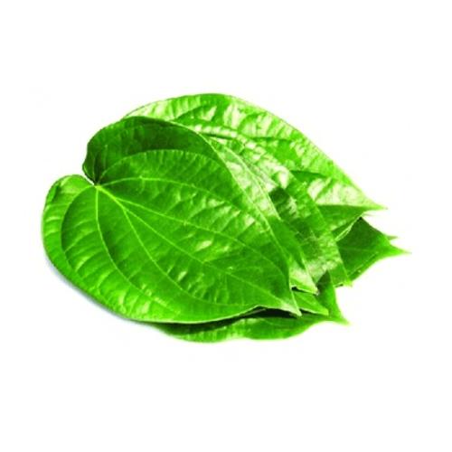 betel leaves 500x500 1